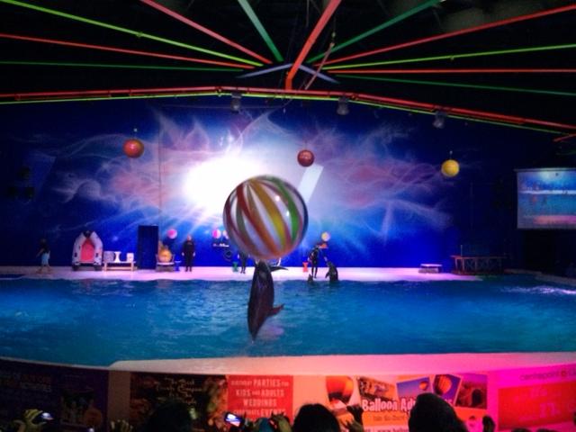 """Delfinerne spiller """"volley"""" med publikum"""