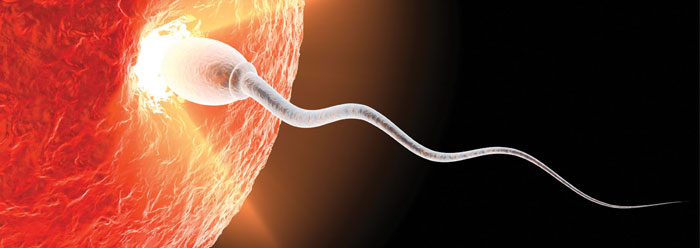 human_reproduction_wide